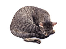 Smutny kot Zdjęcia Stock