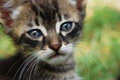 Smutny Kot Obrazy Royalty Free