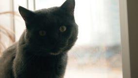 Smutny kota obsiadanie przy okno i czekanie dla jego kochanki zbiory