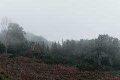 Smutny mgłowy las w górze Zdjęcie Stock