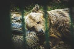 smutny niedźwiedź Obrazy Royalty Free