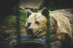 smutny niedźwiedź Obraz Stock