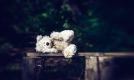 Smutny osamotniony miś opuszczać w ogródzie zdjęcie stock