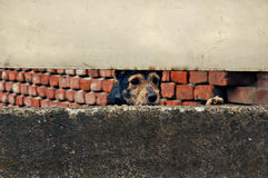 smutny pies obrazy stock