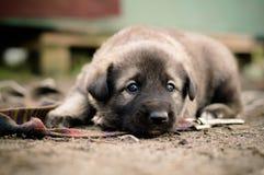 smutny pies fotografia stock