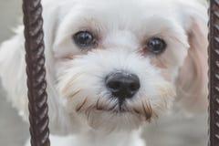 smutny pies zdjęcia royalty free