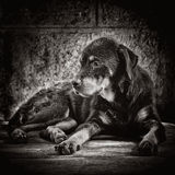 Smutny pies porzucający na ulicach Zdjęcie Stock
