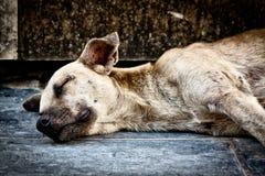 Smutny pies porzucający na ulicie Fotografia Royalty Free