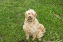Smutny pies w azylu Obrazy Stock