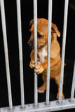 Smutny pies w klatce Zdjęcia Royalty Free