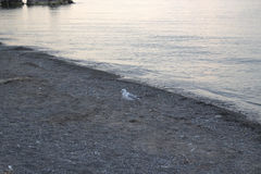 smutny seagull Obraz Royalty Free