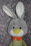 Smutny szary królik Obraz Royalty Free