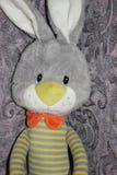 Smutny szary królik Fotografia Stock