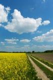 smuts fields vägen Royaltyfria Foton