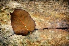 Grungebakgrund med en Leaf Arkivbild