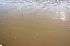 Smutsa ner vatten i floden Arkivfoto