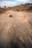 Smutsa skogen royaltyfria foton