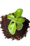 smutsar försiktig green för kantjusteringen royaltyfria foton