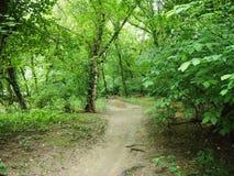 Smutsbana i skog Arkivbild