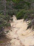 Smutsbana mellan buskarna - Roadtrip ner huvudväg ingen 1 längs den Kalifornien Stillahavskusten royaltyfri fotografi