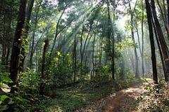 Smutsbana till och med Misty Forest Royaltyfri Fotografi