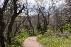 Smutsbana till och med skogsmarker Arkivfoton