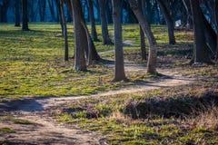 Smutsbana till och med träden Fotografering för Bildbyråer