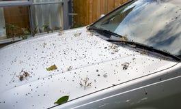 smutsig bil arkivbild