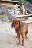 smutsig hund Royaltyfri Foto