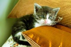 smutsig kattunge Royaltyfri Foto