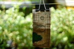 smutsig och nedfläckad dollar, smutsiga pengar royaltyfri fotografi