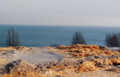 Smutsig skrapad gammal coquinavägg, som bakgrund Arkivbild