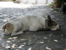 Smutsig stads- hund som tänker i golvet royaltyfria foton