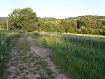 Smutsig väg med greengrass Royaltyfri Foto