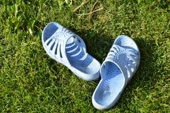 Smutsiga blåa häftklammermatare är på det gröna gräset Royaltyfria Foton