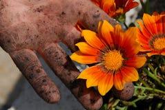 smutsiga fingrar blommar orangen royaltyfri foto