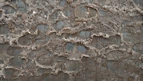 Smutsiga spår av snö på asfalten, den första snön, i staden Dålig ekologi, smutsar ner snö Fotspår av skor på fotografering för bildbyråer