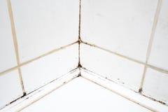 Smutsiga tegelplattor i badrumdusch Royaltyfri Foto
