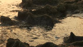 Smutsigt slut för havsvatten upp arkivfilmer