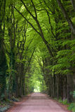 smutsskogväg Arkivfoto