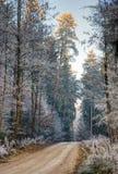 Smutsspår till och med en skog med frostade träd Arkivbild