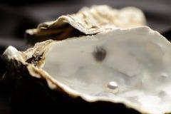 Smycken pärla i en ostron arkivbild