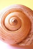 snäckskal arkivfoto