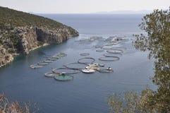 Snäckskal brukar för att odla i det Aegean havet i Grekland fotografering för bildbyråer