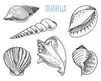 Snäckskal eller olika former för mollusca Havsvarelse den inristade handen som dras i gammalt, skissar, tappningstil nautiskt ell vektor illustrationer