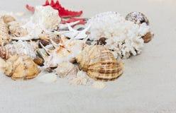 """Snäckskal för †för strandsommarbakgrund """"och havsstjärnor på sanden, kopieringsutrymme för text arkivfoto"""