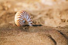 Snäckskal för skal för Nautiluspompiliushav på den svarta sandstranden, ö Royaltyfria Foton