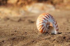 Snäckskal för skal för Nautiluspompiliushav på den svarta sandstranden, ö Royaltyfri Fotografi