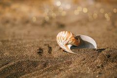 Snäckskal för skal för Nautiluspompiliushav på den svarta sandstranden, ö Arkivbilder