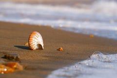 Snäckskal för skal för Nautiluspompiliushav på den svarta sandstranden, ö Arkivfoto